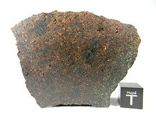 NWA 3151 Brachinite Meteorite